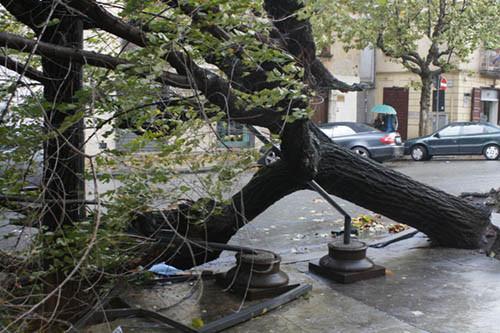 Maltempo, Roma: albero cade vicino al Luneur, ferita una donna