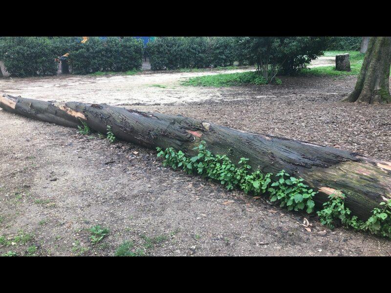 giardini senza manutenzione a Roma