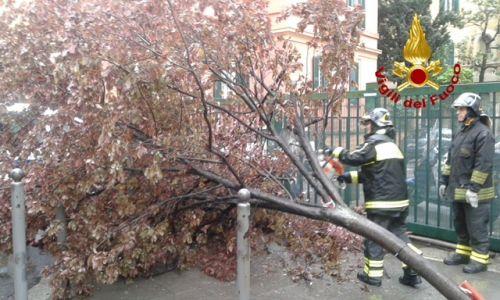 maltempo albero caduto