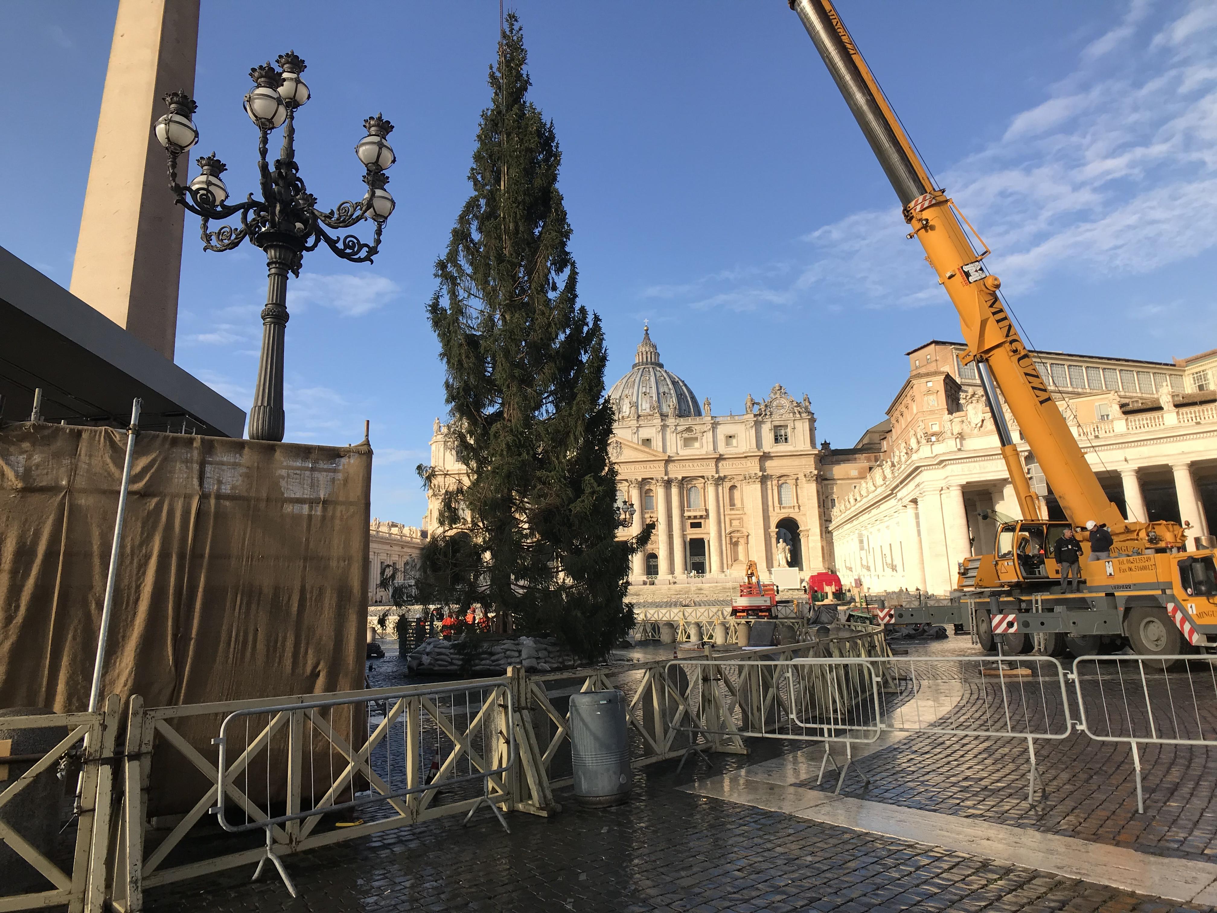 Albero di Natale a San Pietro