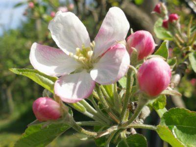 La Natura festeggia la vita con mille fioriture
